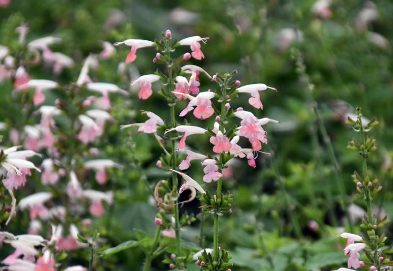 f:id:flowerTDR:20201010085630j:plain