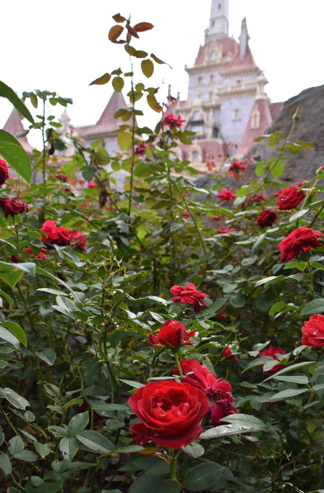 f:id:flowerTDR:20201012001414j:plain