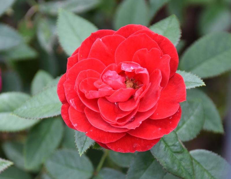 f:id:flowerTDR:20201012001516j:plain