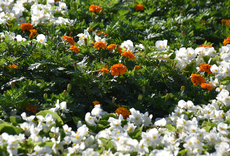 f:id:flowerTDR:20201013092042j:plain