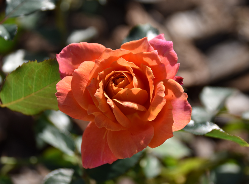f:id:flowerTDR:20201013193303j:plain