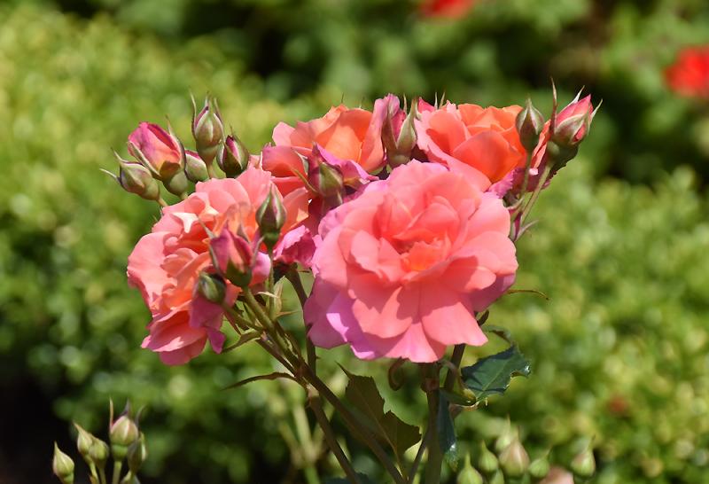 f:id:flowerTDR:20201013195521j:plain