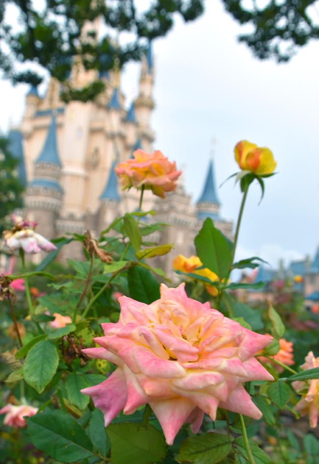 f:id:flowerTDR:20201014083210j:plain