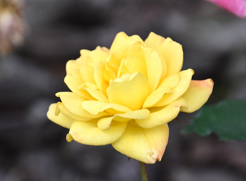 f:id:flowerTDR:20201014083706j:plain