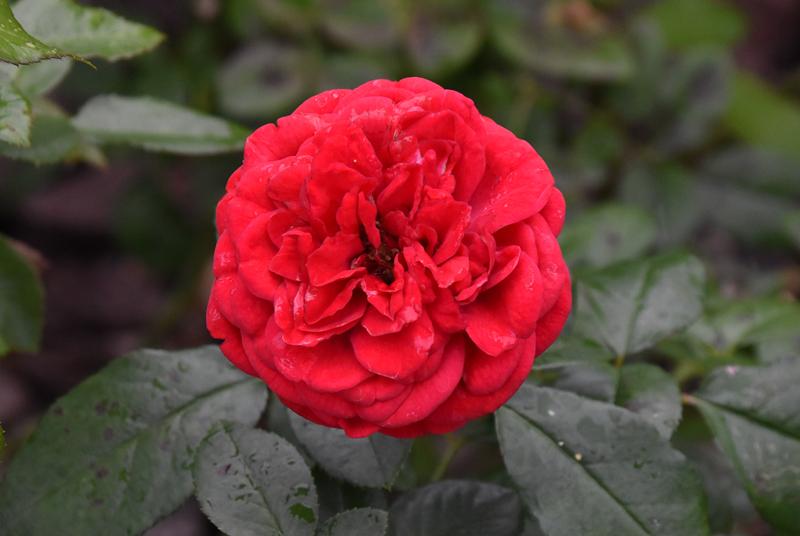 f:id:flowerTDR:20201015083359j:plain