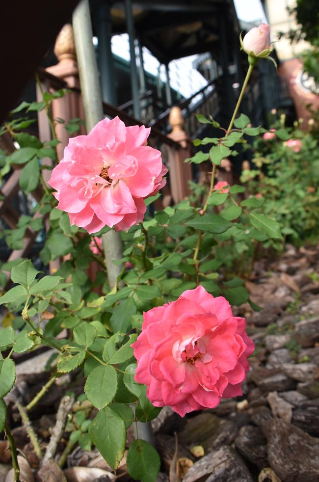 f:id:flowerTDR:20201017141409j:plain