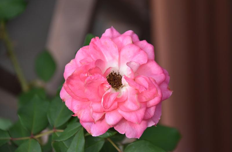 f:id:flowerTDR:20201017141455j:plain