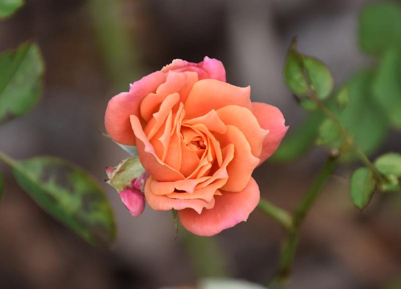 f:id:flowerTDR:20201017141552j:plain
