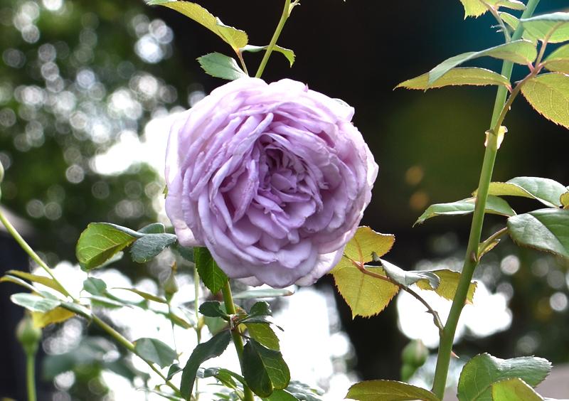 f:id:flowerTDR:20201017141618j:plain