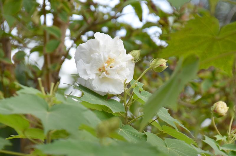f:id:flowerTDR:20201020082941j:plain