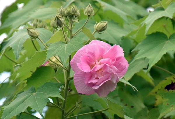 f:id:flowerTDR:20201020090341j:image