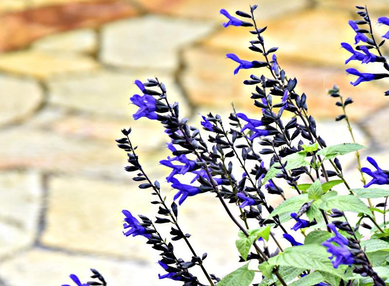 f:id:flowerTDR:20201023092957j:plain