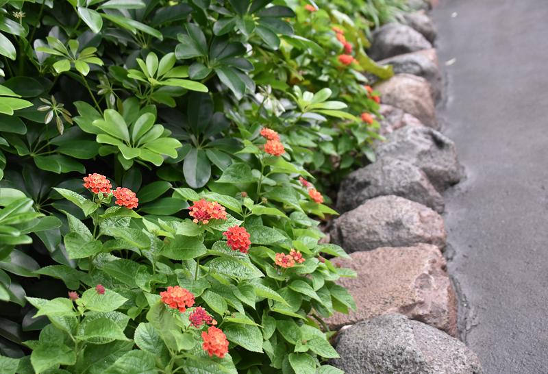 f:id:flowerTDR:20201027081934j:plain