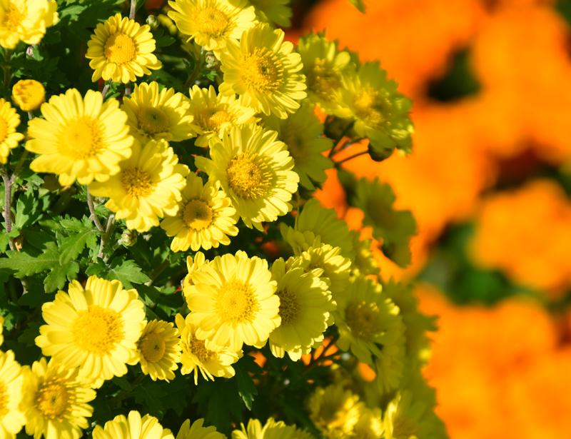 f:id:flowerTDR:20201030093532j:plain