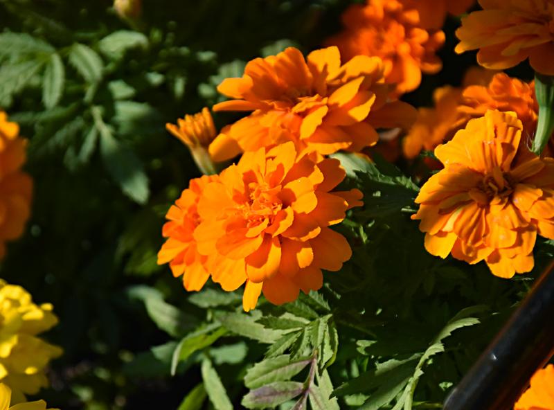 f:id:flowerTDR:20201030093608j:plain