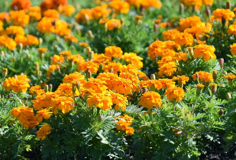 f:id:flowerTDR:20201031091144j:plain