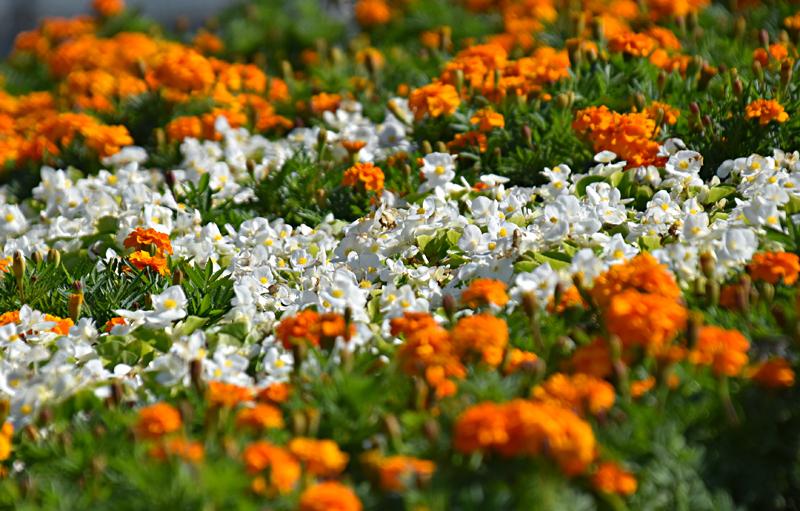 f:id:flowerTDR:20201031091232j:plain