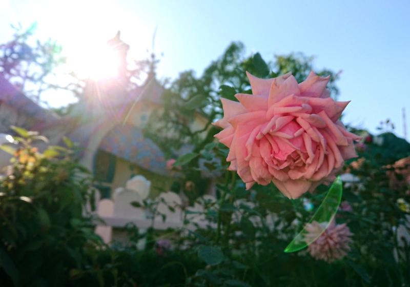 f:id:flowerTDR:20201101094000j:plain