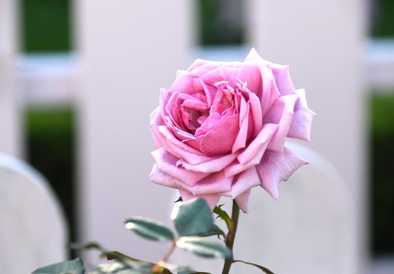 f:id:flowerTDR:20201101094619j:plain