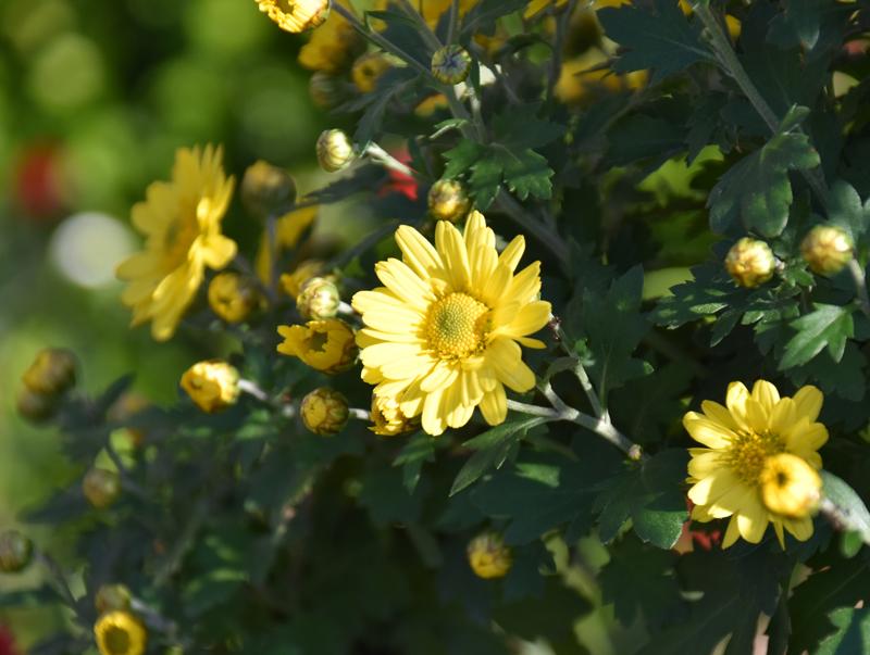 f:id:flowerTDR:20201105232727j:plain