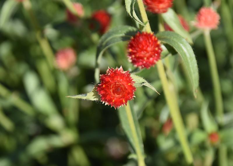 f:id:flowerTDR:20201107092441j:plain