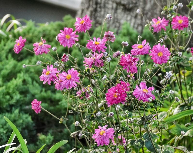 f:id:flowerTDR:20201110090905j:image