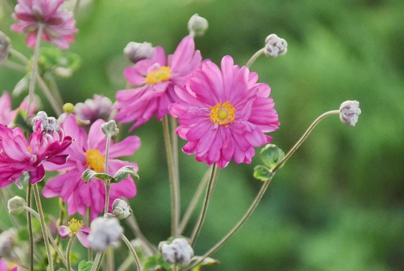 f:id:flowerTDR:20201110090916j:image