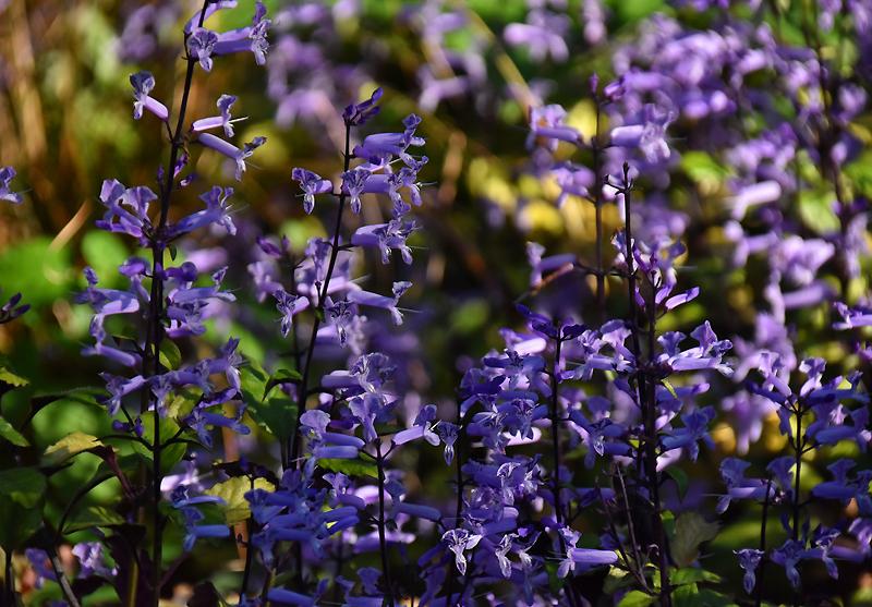 f:id:flowerTDR:20201112081231j:plain