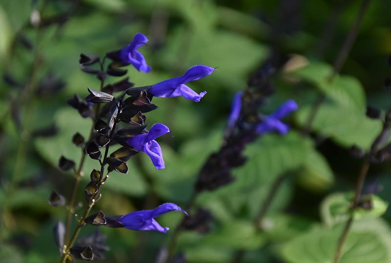 f:id:flowerTDR:20201112081243j:plain
