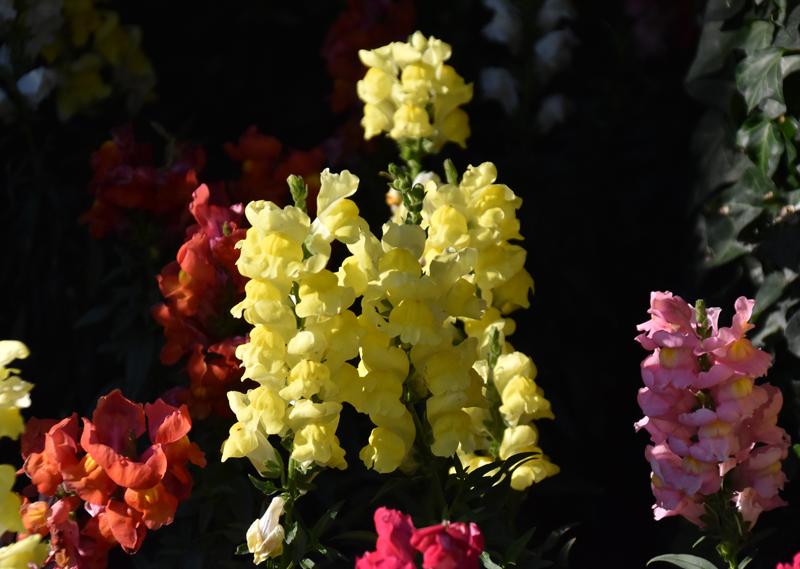 f:id:flowerTDR:20201113112541j:plain