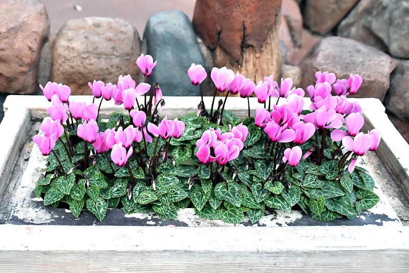 f:id:flowerTDR:20201113112915j:plain