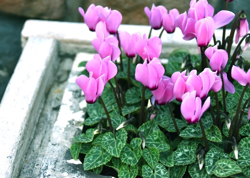 f:id:flowerTDR:20201113112925j:plain