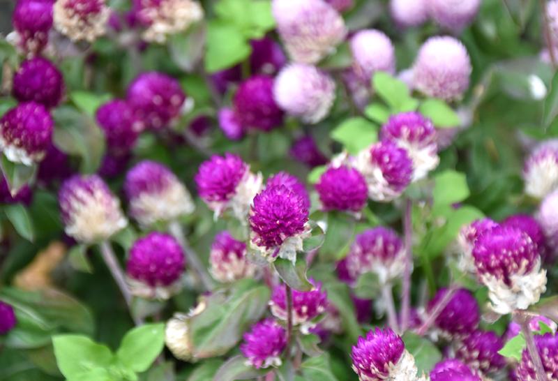 f:id:flowerTDR:20201122084316j:plain