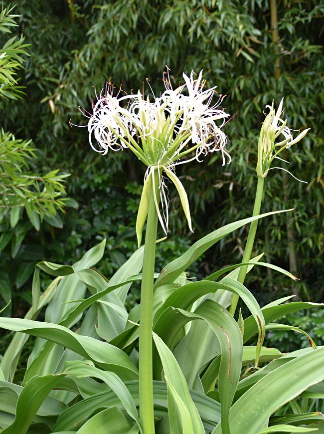 f:id:flowerTDR:20201123071650j:plain