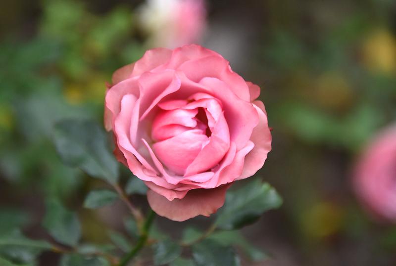 f:id:flowerTDR:20201125080756j:plain