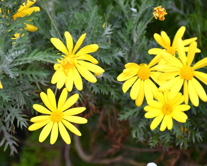 f:id:flowerTDR:20201126011714j:plain