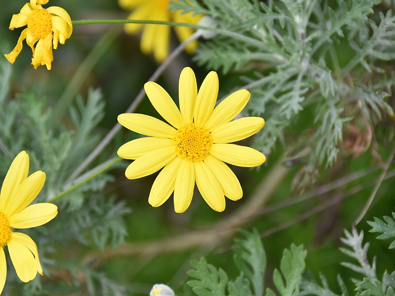 f:id:flowerTDR:20201126011756j:plain