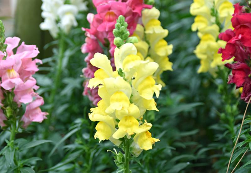 f:id:flowerTDR:20201127090008j:plain