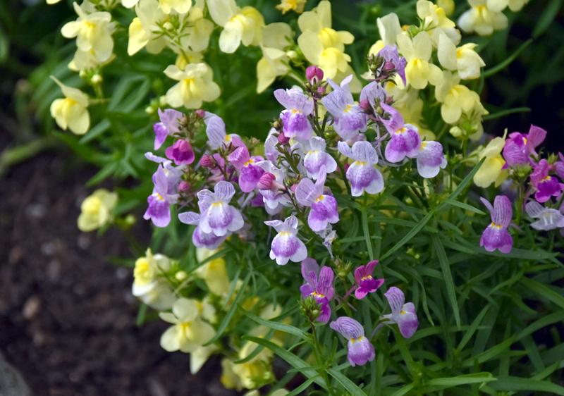 f:id:flowerTDR:20201130081110j:plain