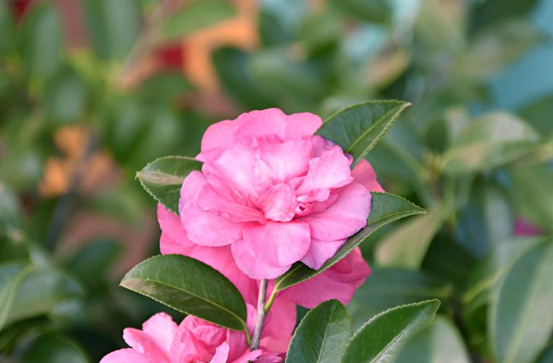 f:id:flowerTDR:20201130233947j:plain