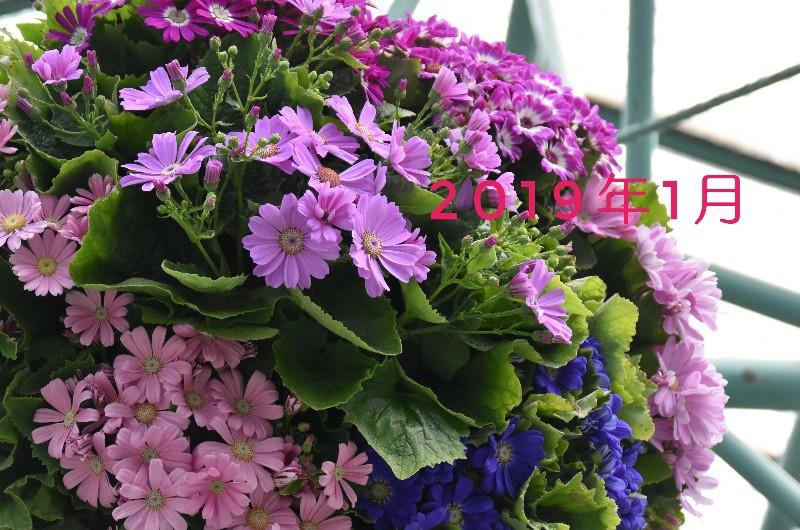 f:id:flowerTDR:20201203092353j:image