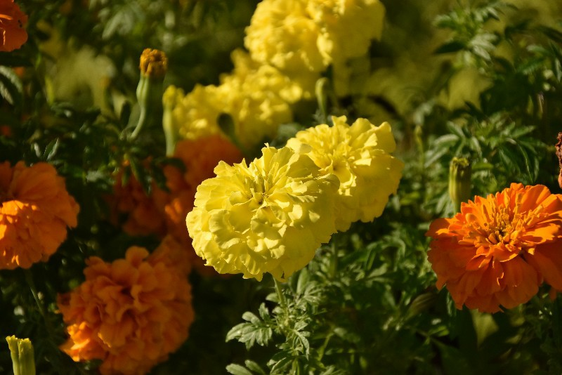 f:id:flowerTDR:20201204091338j:image