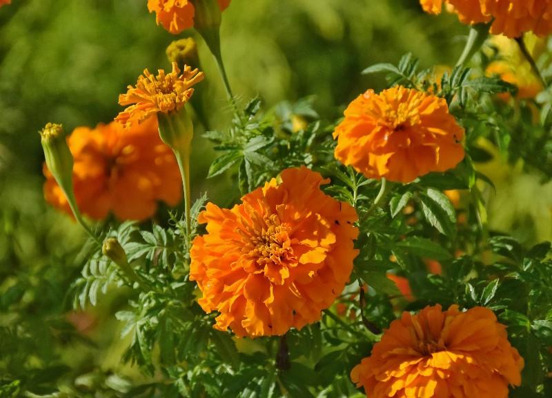 f:id:flowerTDR:20201204091346j:image