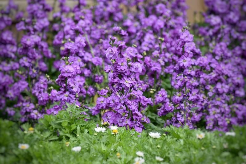 f:id:flowerTDR:20201205084430j:image