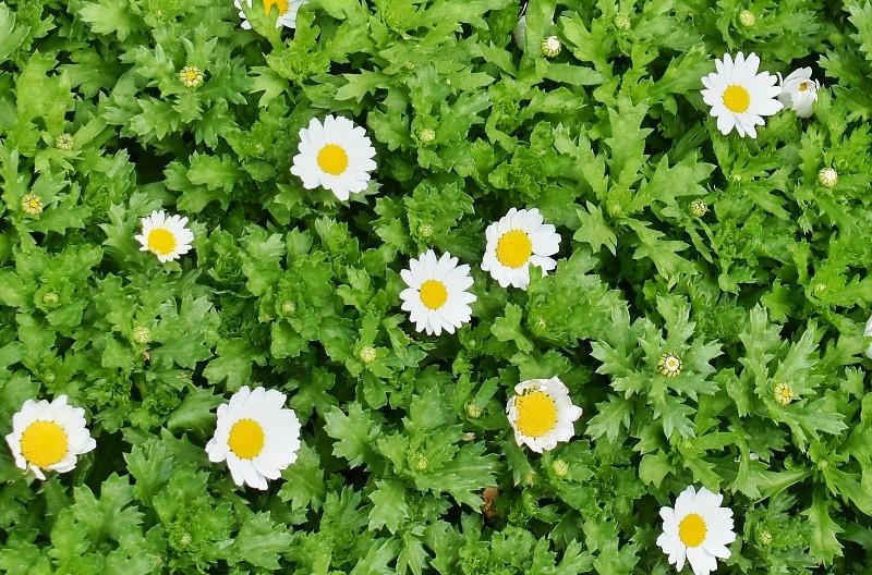 f:id:flowerTDR:20201205084528j:image