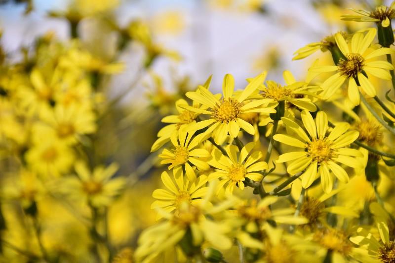 f:id:flowerTDR:20201208091741j:image