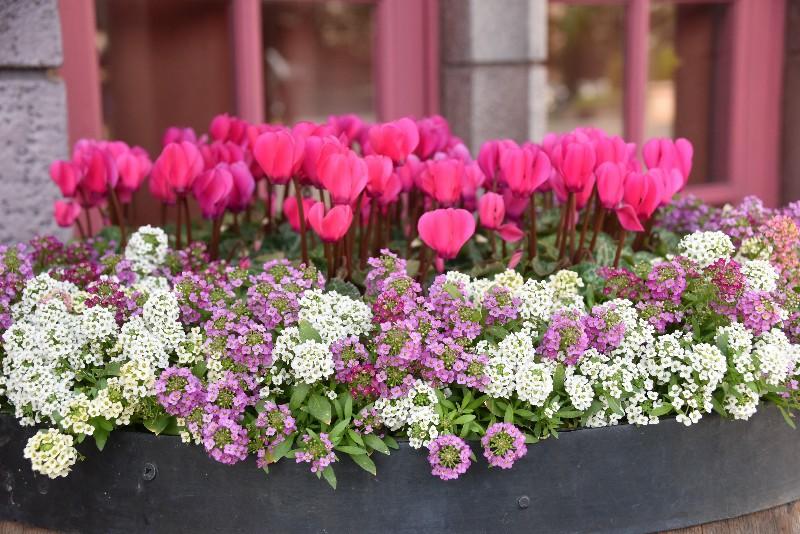 f:id:flowerTDR:20201215091911j:image