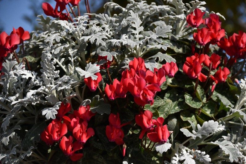 f:id:flowerTDR:20201216092238j:image