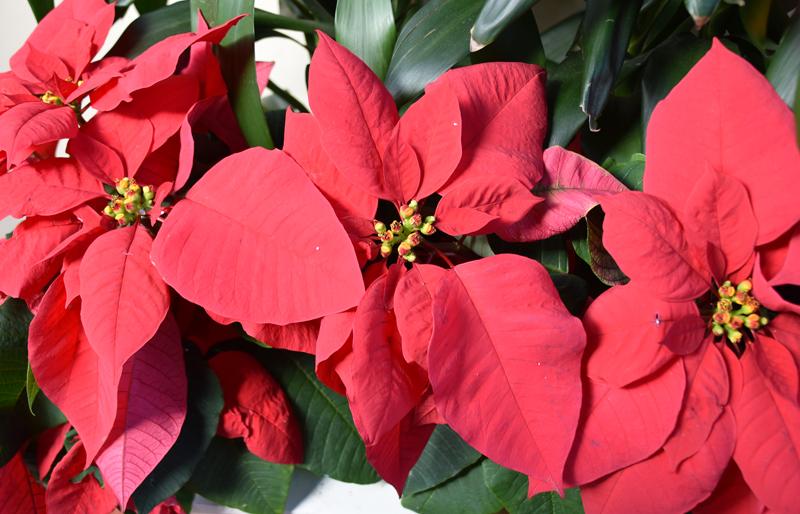 f:id:flowerTDR:20201218092329j:plain