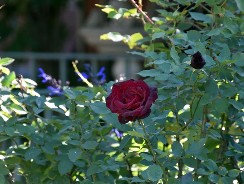 f:id:flowerTDR:20201219093536j:plain